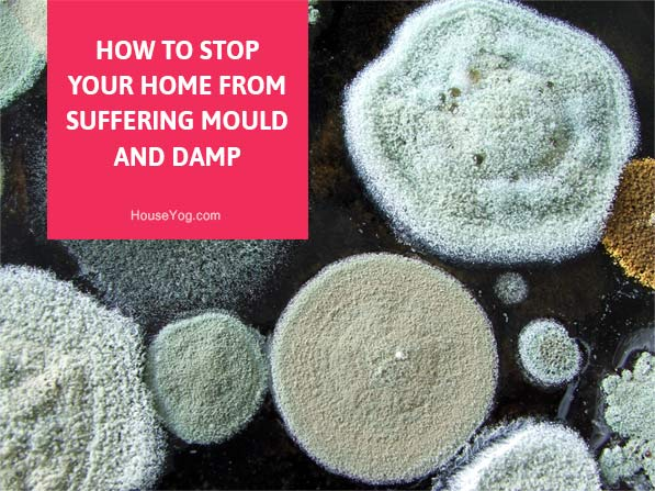 How to Stop Your Home from Suffering Mould and Damp